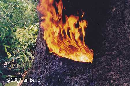 Baird 3