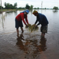 The 2011 flood that had ravaged one-quarter of Thailand has not, surprisingly, adversely affected the overall rice production. That should be good news for the government. Since rice has become […]