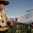 Eradicating poverty and not drug crops is the way to curb Shan state's opium trade.