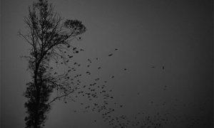 Photo: Dino Ahmad Ali on flickr https://www.flickr.com/photos/dinoowww/