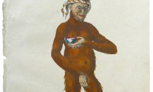 Orangutan-480